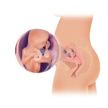 18 săptămâni greutate gravidă pierdere