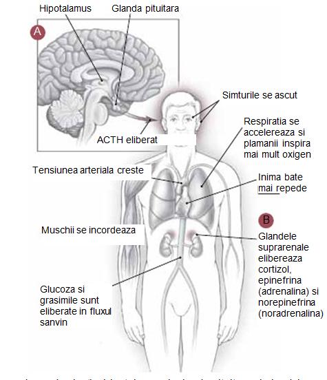 Stresul poate afecta creierul, inima și articulațiile
